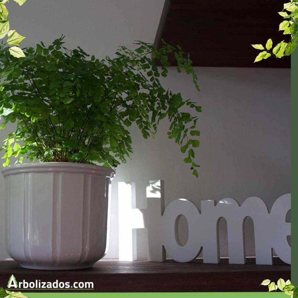 Plantas en tu casa.